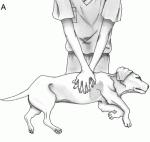 Πρώτες Βοήθειες για τους τετράποδους συντρόφους μας