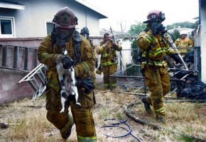 Βιώνοντας 7 αυτοκτονίες σε 18 μήνες στην Πυροσβεστική