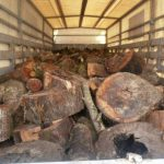 Είχαν φορτώσει στη νταλίκα... ολόκληρο το δάσος!