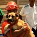 Διάσωση σκύλου από κρατήρα 215 μέτρων