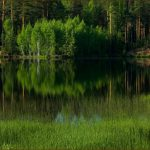 Τα δάση βρίσκονται σε κίνδυνο