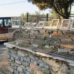 Νέα χτυπήματα κατά του παράνομου εμπορίου άγριας πανίδας