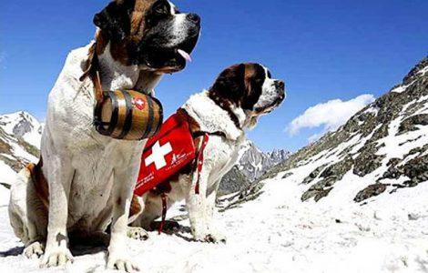 Η ιστορία των σκύλων διάσωσης του Αγίου Βερνάρδου