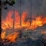 Τούρκοι πράκτορες έβαλαν τις φωτιές το 2007 στην Ηλεία!