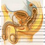 Καρκίνος του προστάτη: Συμπτώματα