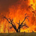 Λιγότερες οι πυρκαγιές το 2014, αλλά πιο καταστροφικές...
