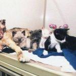 Η ηρωική γάτα που πήδηξε 5 φορές στη φωτιά για να σώσει τα μικρά της