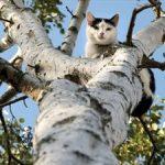 Η Πυροσβεστική αρνείται να απεγκλωβίσει γάτα