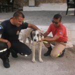 Οι πυροσβέστες έσωσαν το σκύλο που έδερνε ο ιδιοκτήτης του!