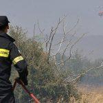 Πώς η Πυροσβεστική έσωσε το δασάκι μας