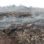 Παγκόσμια απειλή απο τις πυρκαγιές σε τυρφώνες