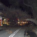 Πτώση δέντρου στην Λ. Μαραθώνος