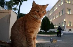 Διάσωση γάτας από την Πυροσβεστική Υπηρεσία Πτολεμαΐδας