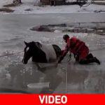 Οχάιο: Πυροσβέστες σώζουν άλογο από παγωμένη λίμνη