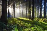 Κατάθεση προτάσεων για τις δασικές πυρκαγιές στον αρμόδιο αναπληρωτή υπουργό