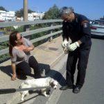 Η Πυροσβεστική έσωσε το σκυλάκι