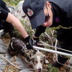 Επιτυχημένη επιχείρηση διάσωσης σκύλου