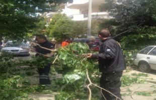 Πτώσεις δέντρων λόγω ισχυρών ανέμων στα Βριλήσσια