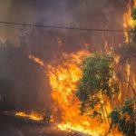 Χρήσεις γης, ιδιοκτησιακό καθεστώς και δασικές πυρκαγιές