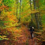 Σε επαγρύπνηση η Διεύθυνση Δασών Ημαθίας για τη Δασοπροστασία 2015