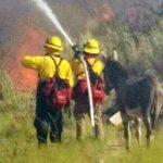 Ένας απροσδόκητος φίλος για τους πυροσβέστες του DHFD