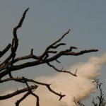 Μόλις το 10%-15% των πυρκαγιών από το 2000 και μετά οφείλονται σε φυσικά αίτια