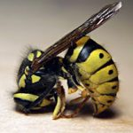 Πρώτες βοήθειες για τσίμπημα μέλισσας και σφήκας
