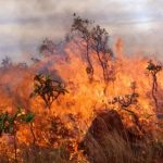 Τιμητική άδεια στους εθνοφρουρούς που απέτρεψαν πυρκαγιά