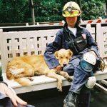 Ενας άγνωστος ήρωας της 11ης Σεπτεμβρίου, Ο σκύλος διασώστης
