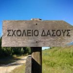 Σχολείο του Δάσους: Ένα κέντρο προσχολικής αγωγής στο δάσος του Διονύσου