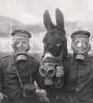 Ιστορία των μέσων προστασίας της αναπνοής, πάρτε μια βαθιά ανάσα...