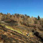 Αυστρία: αντι για χιόνια δασικές πυρκαγιές