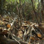 Πακιστανός έβαλε φωτιά στο δάσος της Κύμης