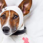 Πρώτες βοήθειες για τον σκύλο σε περίπτωση δηλητηρίασης
