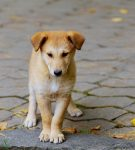 Διάσωση αδέσποτων ζώων : 10 συμβουλές για αρχάριους και μη!