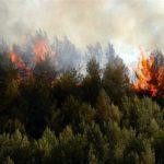 Γιατί ακόμα μία χρονιά πολλές και μεγάλες πυρκαγιές;