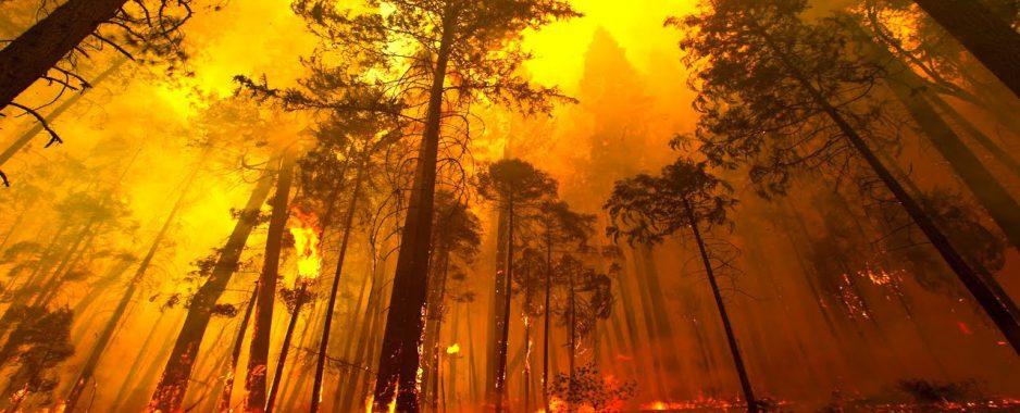 Πρόληψη και Αντιμετώπιση Δασικών Πυρκαγιών