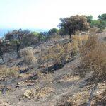 """Διασύνδεση του πυροσβεστικού σώματος με τη βάση γεωχωρικών  δεδομένων του ΟΠΕΚΕΠΕ –Αντιμετώπιση """"Βοσκοφωτιών"""""""