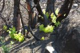 Δασικές πυρκαγιές και οικονομικές επιπτώσεις