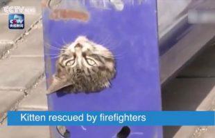 Πυροσβέστες σώζουν γατάκι που είναι παγιδευμένο σε σωλήνα