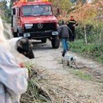 Άργος: Πυροσβέστες έσωσαν 20 σκυλιά από βέβαιο θάνατο