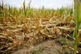 Αγροτικές Αποζημιώσεις και Προστασία της Αγροτικής Δραστηριότητας μετά από μία φυσική καταστροφή