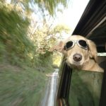 Ζώα στο αυτοκίνητο: Τι να προσέξεις σε ένα ταξίδι