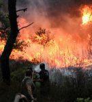 Πλήρης η άγνοια της κοινωνίας απέναντι στις πυρκαγιές